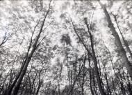 1_2P525_RGB