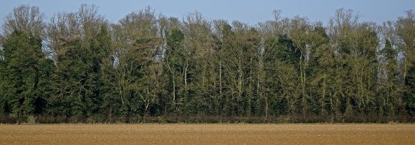 Marmston tree line